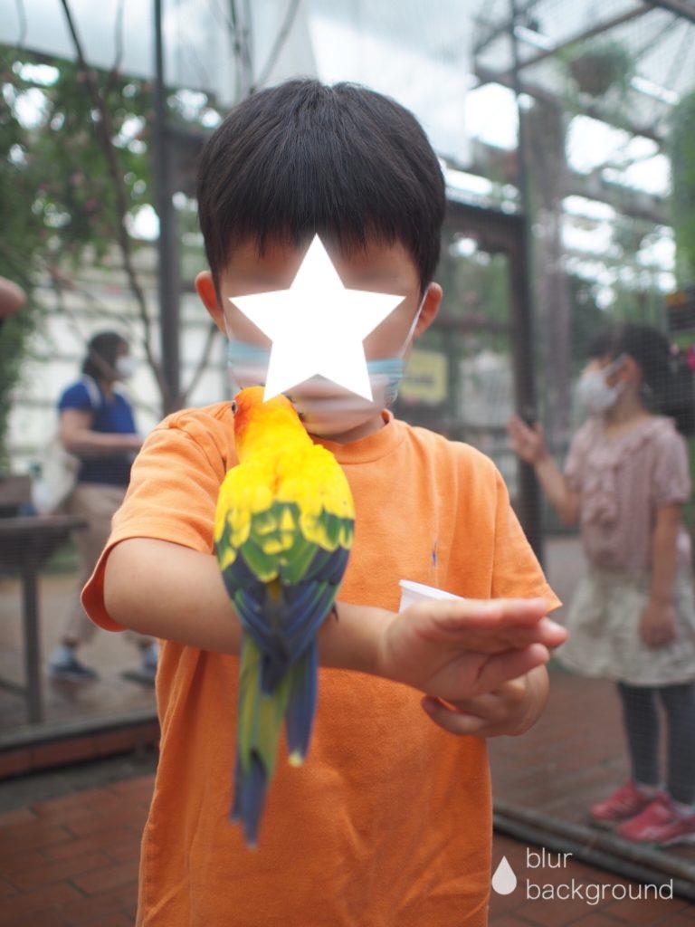 富士花鳥園 ロリキート(インコ)ランディング