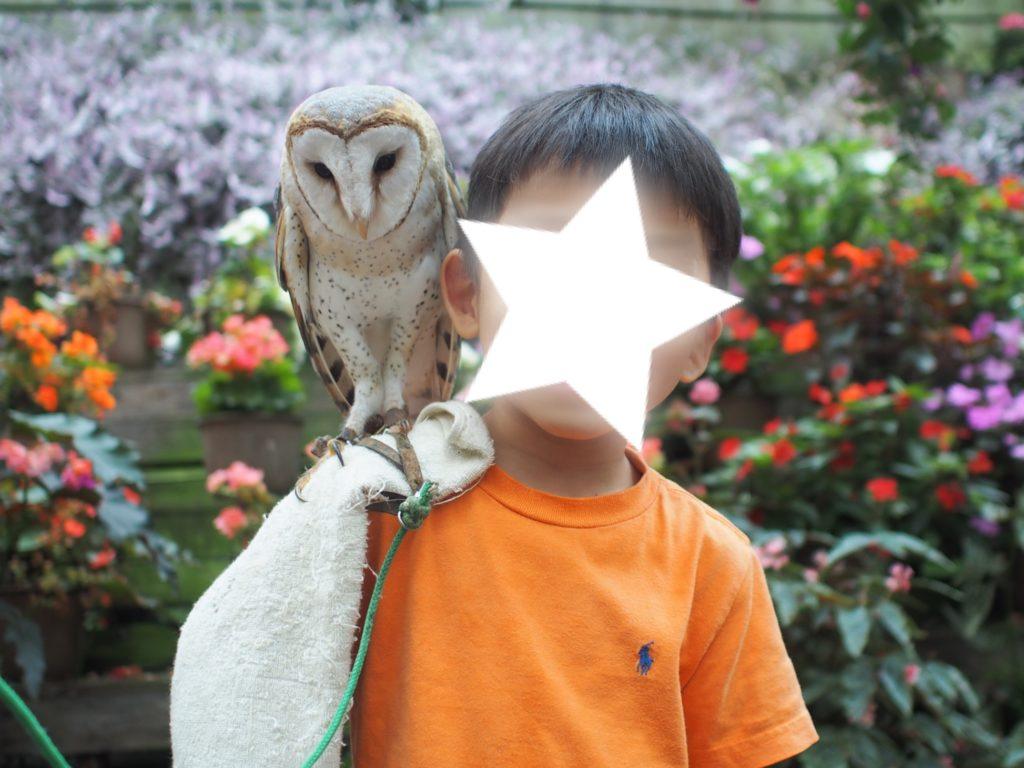 富士花鳥園 フクロウと記念写真