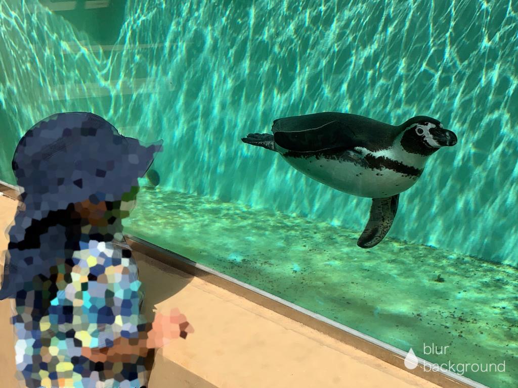 下田海中水族館 ペンギンパノラマプール