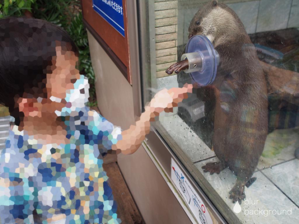 下田海中水族館 カワウソ餌やり体験