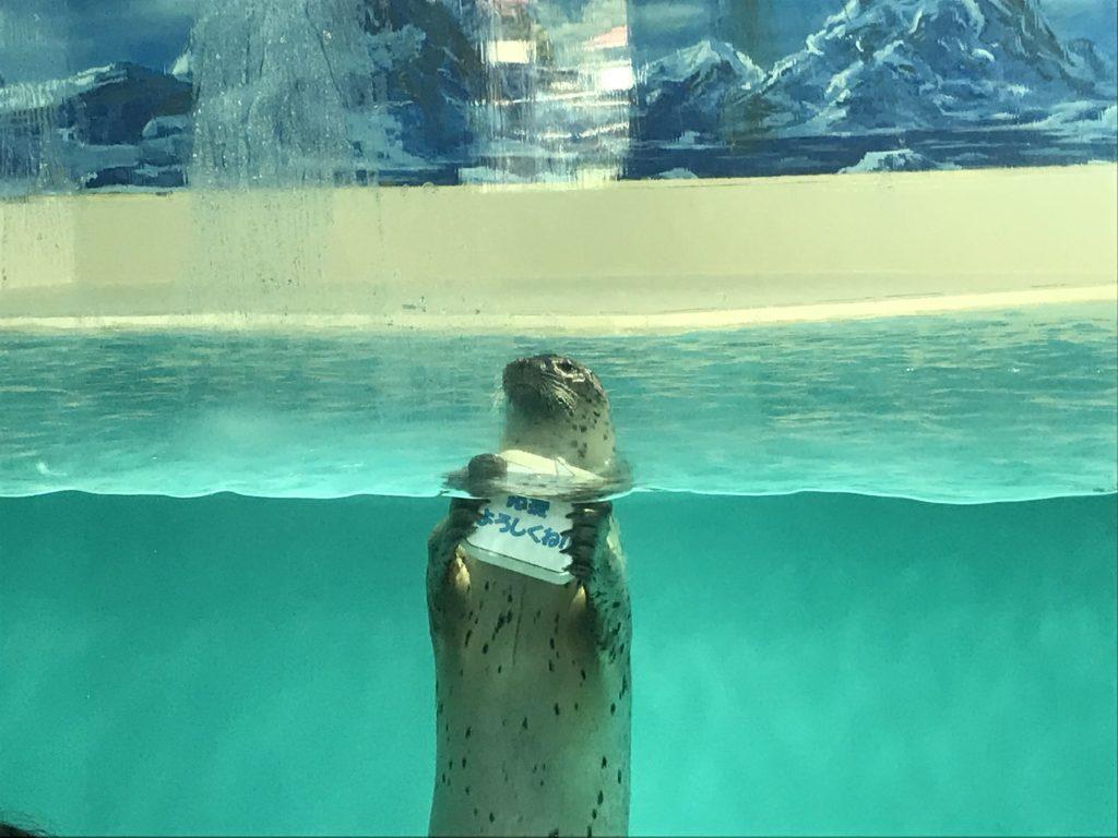 下田海中水族館 アザラシショー スマイルシップ
