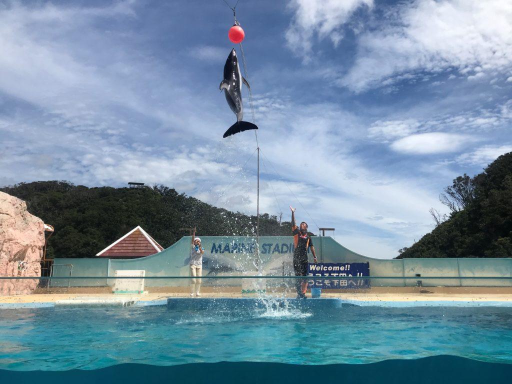 下田海中水族館 イルカショー マリンファンタジー