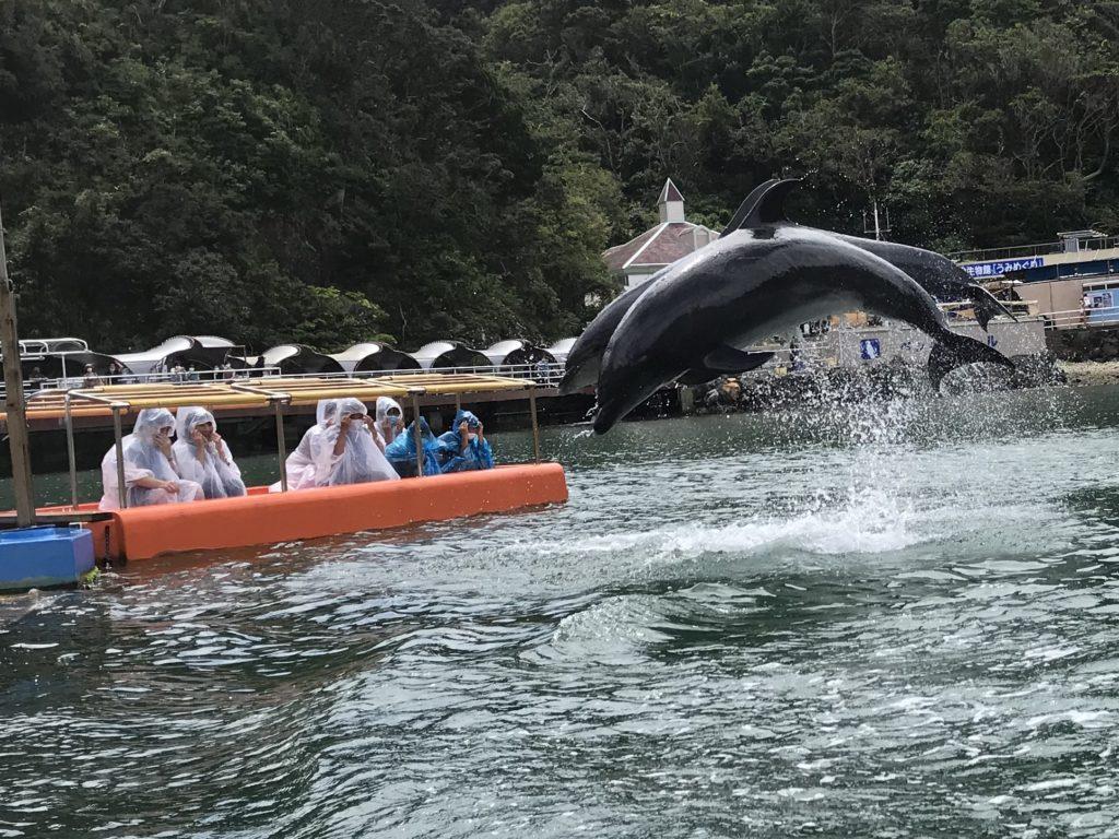 下田海中水族館 アメイジングシート