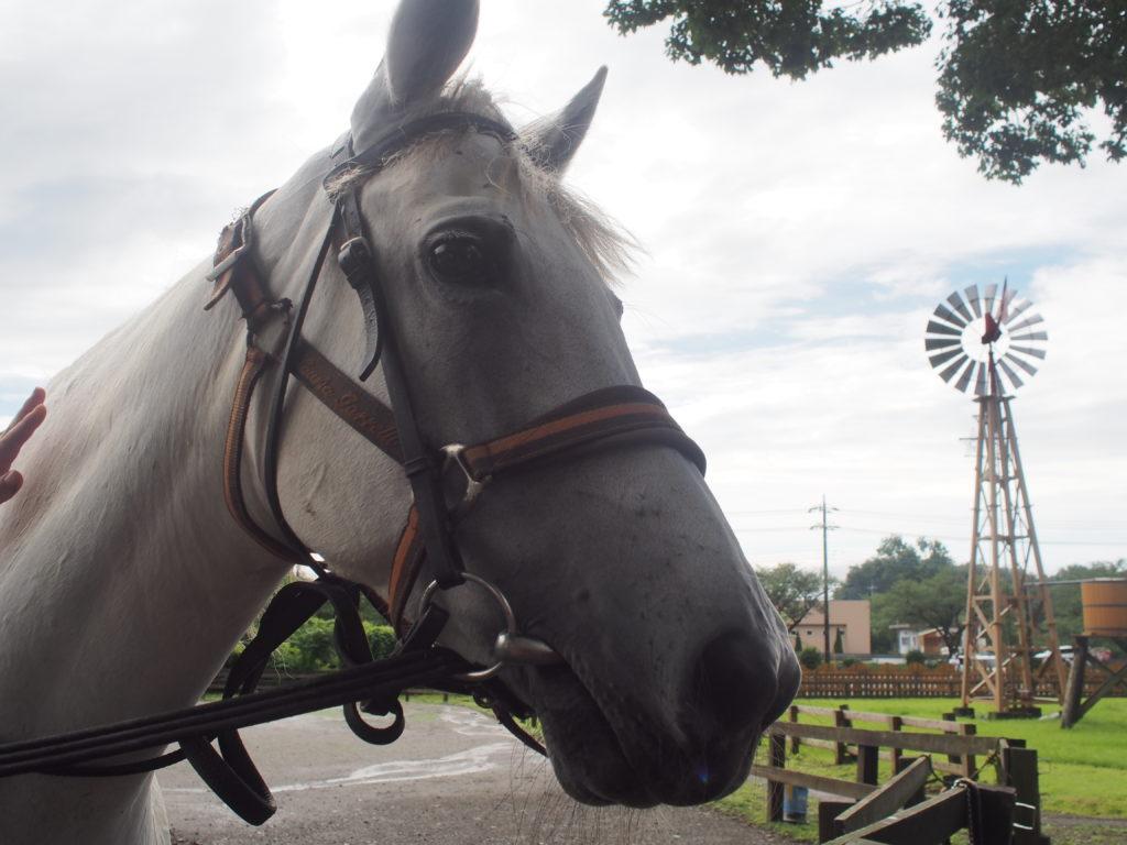 まかいの牧場 馬の運動観察