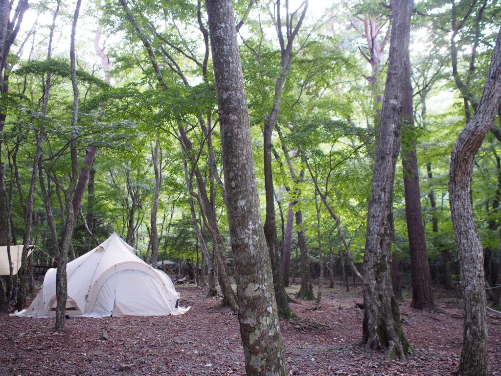 林間サイト(車乗り入れ不可):北麓の森キャンプ
