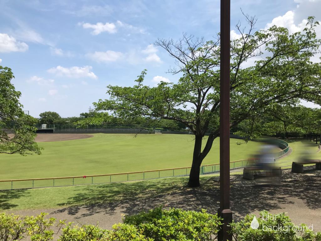 野球場前のベンチや芝生